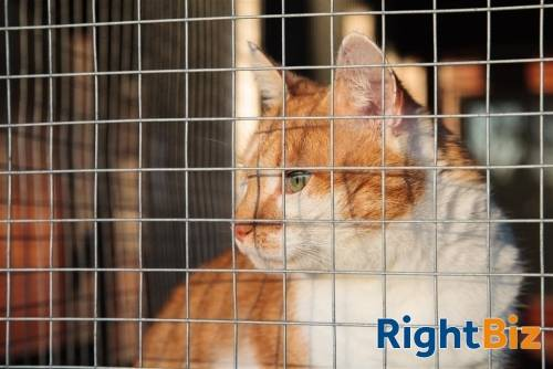 Licensed Cattery, Isle Of Man - Image 13