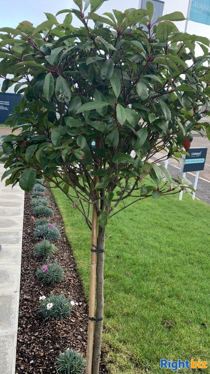 Somerset Landscaping business included with website and advertising all done !!! - Image 2