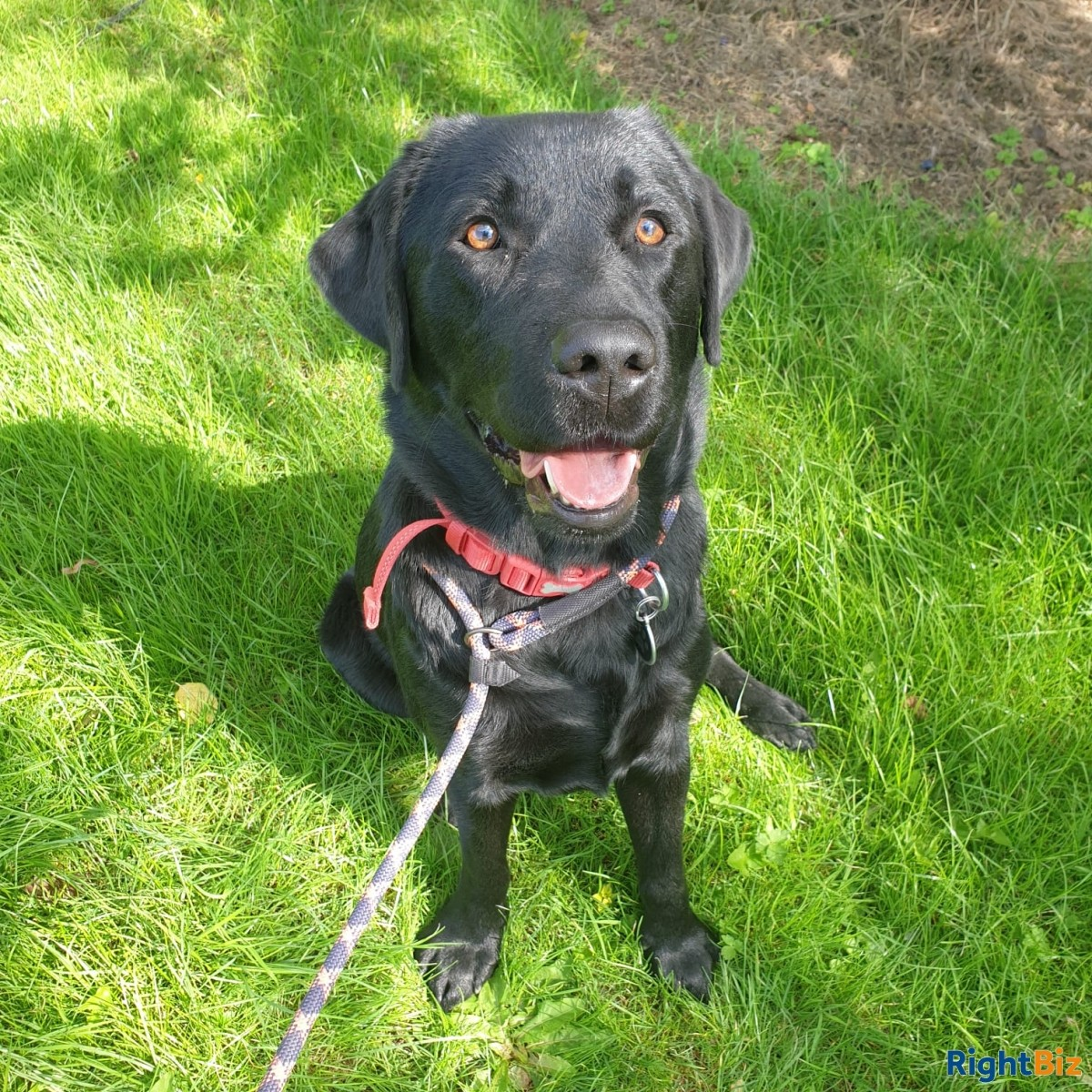 Successful Dog Training Business in Prime Location for Sale - Image 2