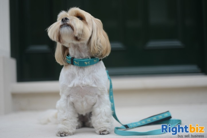 Canine Boutique For Sale - Image 6