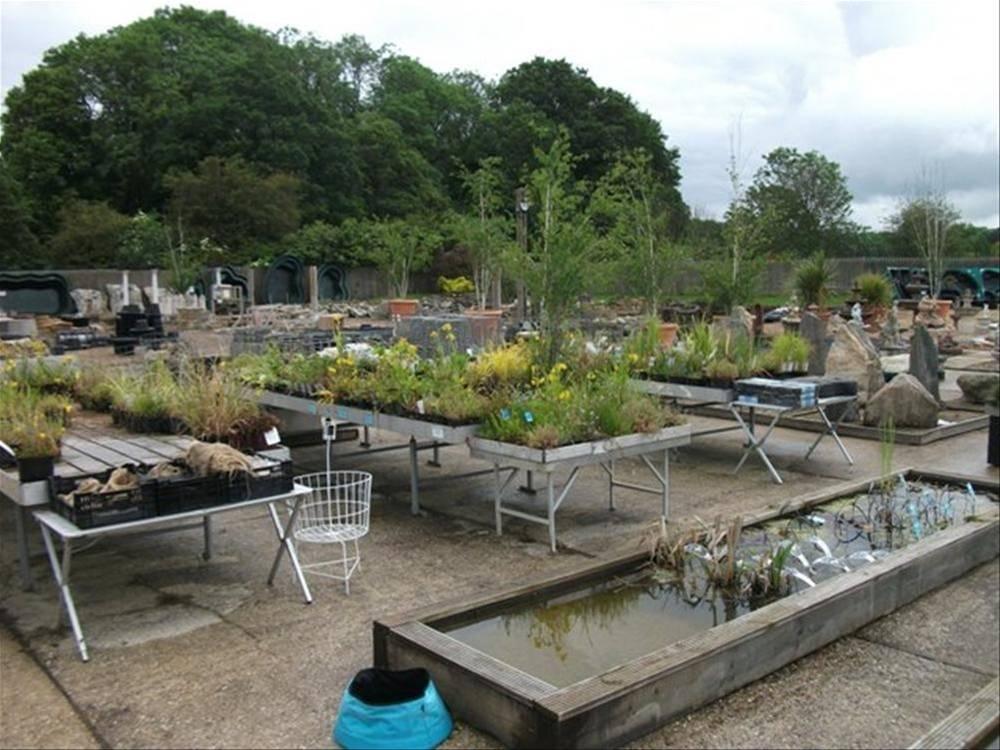 Garden Centre - Sherfield-on-Lodden - Image 9